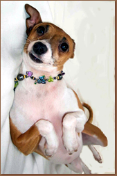 Cute doggy wearing custom design jewelry by Harper & Faye Boston